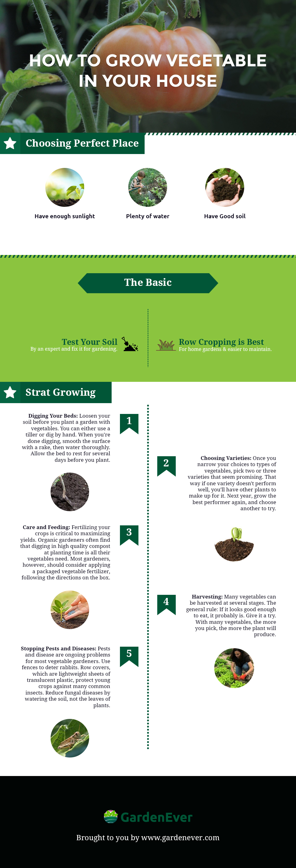 How To Grow Vegetable In Your House [Infographic]
