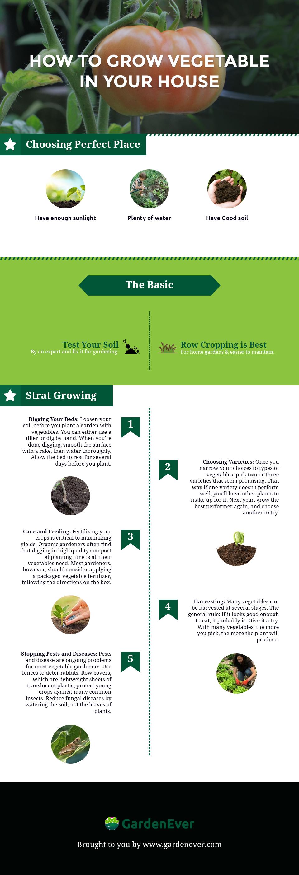gardenever infographic